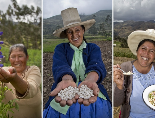 Super Tarwi: la pianta dalle mille virtù