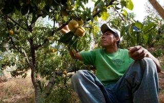 Agricoltura e sviluppo sostenibile nell'Ancash, in Perù