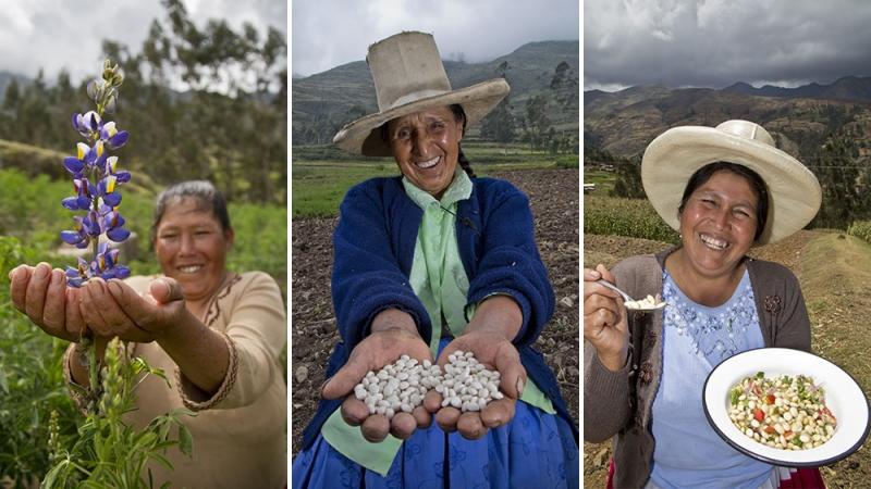 Produzione del Lupino Tarwi dalla pianta alla tavola