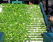 Fabbrica Lime Nepal
